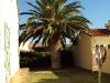 Haven med palme